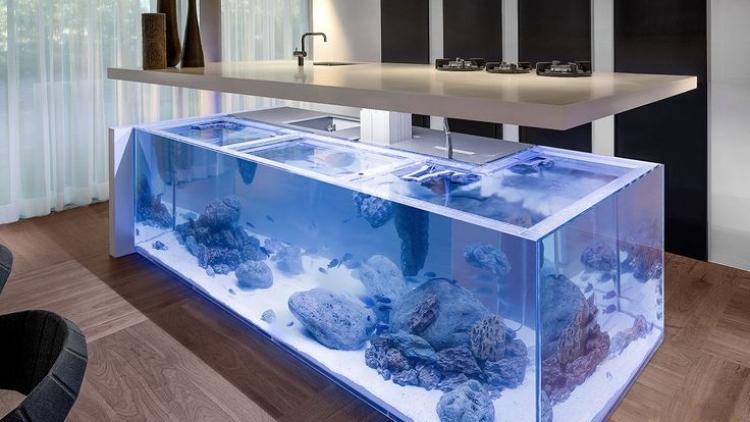 ilot cuisine aquarium